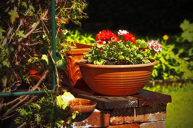 flores-jardin