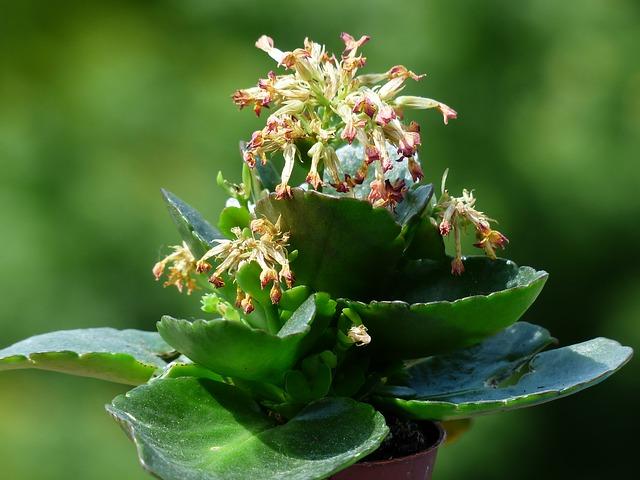 ¿Qué importancia tiene la humedad en las plantas?