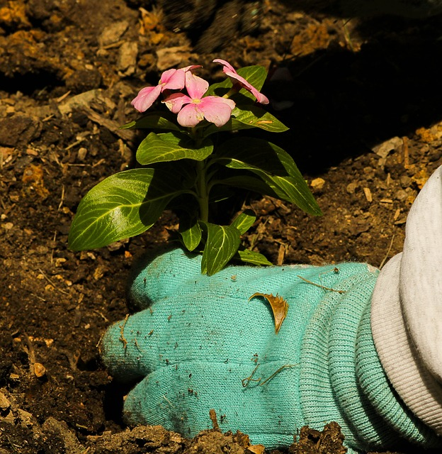plantando-flores