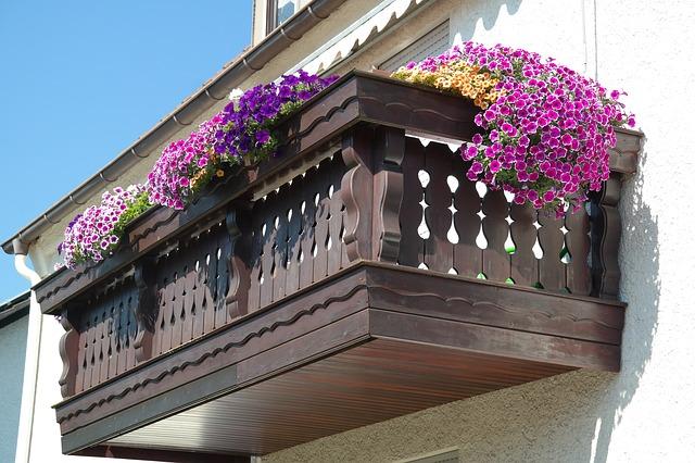 Sugerencias para terrazas, balcones, maceteros y canteros para jardines