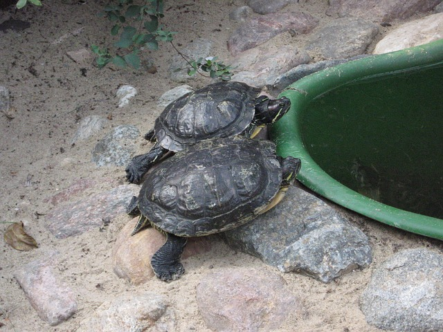 Tortugas de tierra, como alimentar a estas mascotas
