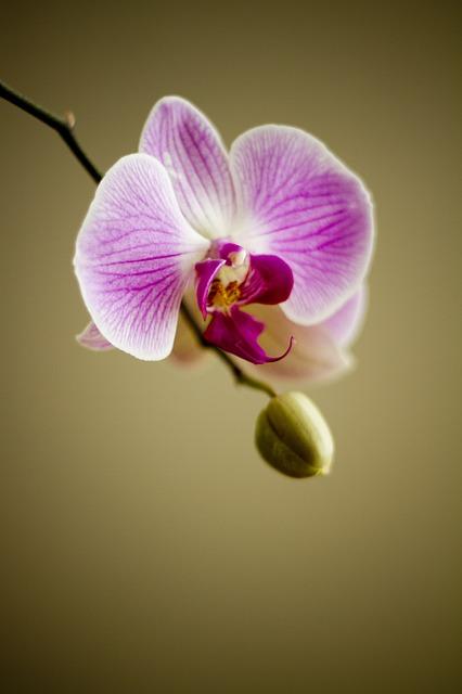 ¿Por qué nos sentimos más atraídos por un tipo de plantas que por otro?