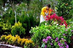 Las esencias florales como alternativa a la medicina, Flores de Bach