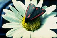 Un jardín lleno de movimiento y color gracias a las mariposas