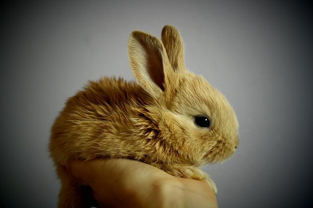 Encantadores roedores, los conejos son muy buenos compañeros