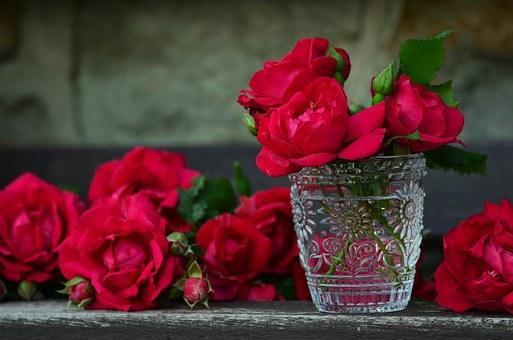 ¿Qué recipientes y soportes usar para Flores y Plantas?