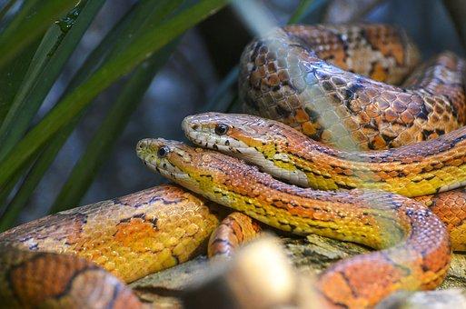 Al ras del suelo: serpientes como mascotas y lo que debes saber