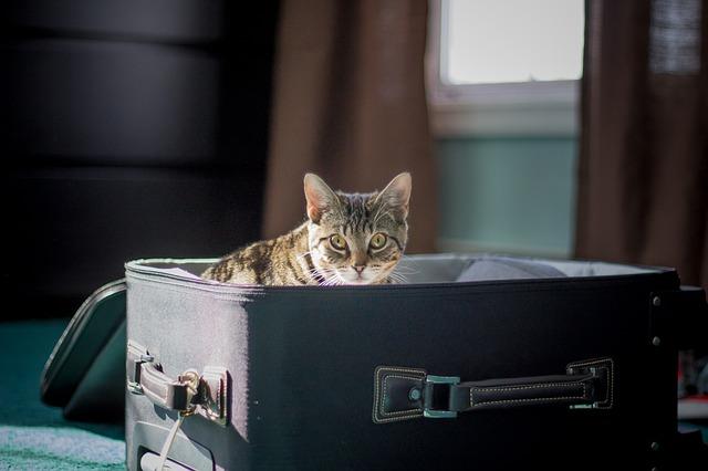 El cuidado de las mascotas cuando nos vamos de viaje