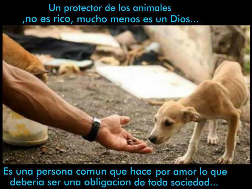 Protector de animales