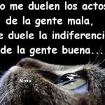 No me duelen los actos de la gente mala, me duele la indiferencia de la gente buena...