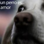 Amar a un perro...es amar al amor.