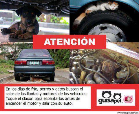 En los días de frio, perros y gatos buscan el calor de las llantas y motores de los vehículos. Toque el Claxon para espantarlos antes de...