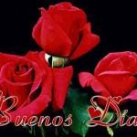 Que sean Buenos Dias como las Rosas