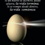 Si un huevo se rompre