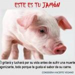 Este es tú Jamón