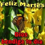 Feliz Martes. Dios bendiga tu día