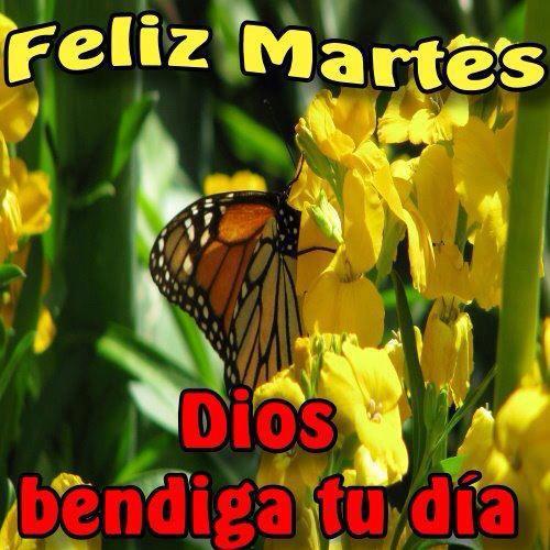 Feliz Martes. Dios bendiga tu día.
