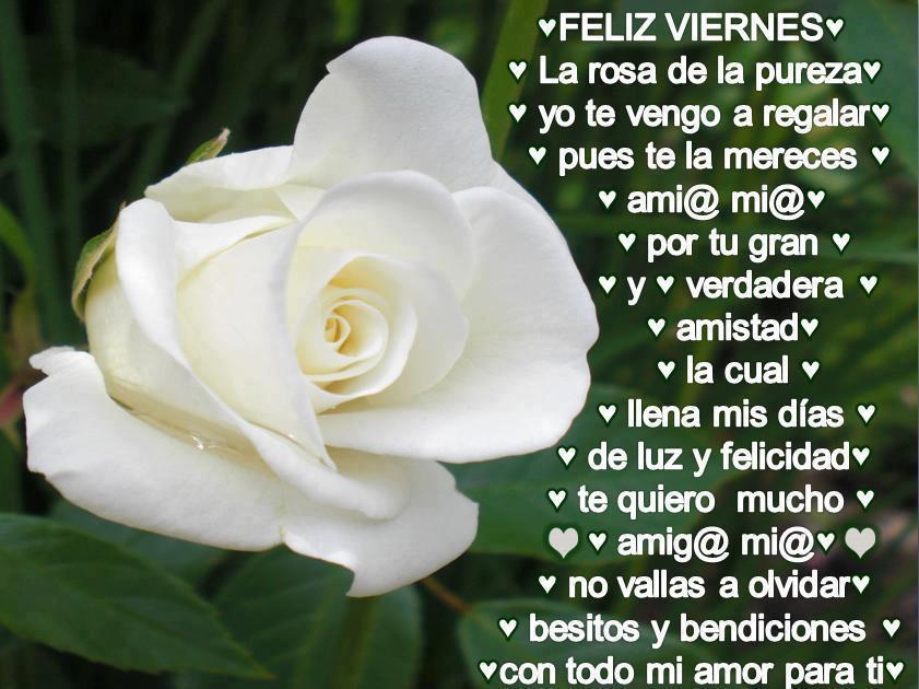 Feliz Viernes. La rosa de la pureza yo te vengo a regalar, pues te la mereces amig@ mi@ por tu gran y verdadera amistad, la cual llena mis días de luz y felicidad....
