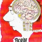 Cerebro del Hombre