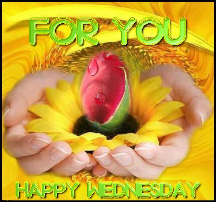 Happy Wednesday. For You
