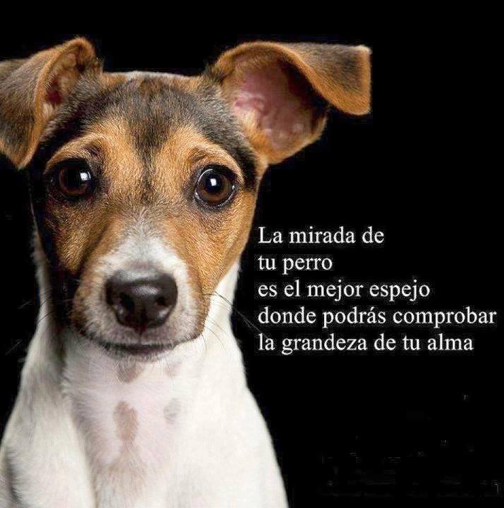 La mirada de tu perro es el mejor espejo donde podrás comprobar la grandeza de tu alma.