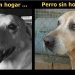 Perro con Hogar y sin Hogar