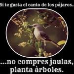 Si te gusta el canto de los pájaros...no compres jaulas, planta árboles.