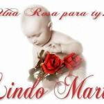 Lindo Martes. Una rosa para ti.