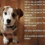 Yo soy un perro para siempre