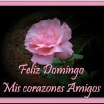 Feliz Domingo. Mis corazones amigos.