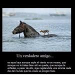 Un verdadero Amigo...es aquel que aunque sople el viento no se mueve, que aunque no le trates bien ahí se queda, que aunque te enfades...