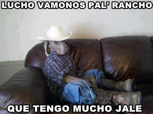 Lucho vamonos pal Rancho, que tengo mucho jale.