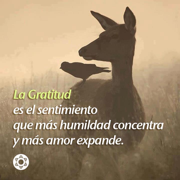 La Gratitud es el sentimiento que más humildad concentra y más amor expande.