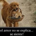 El amor no se explica...se siente!