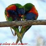 Día de la Amistad y el Amor. En las alas del amor...