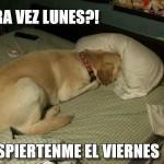 Otra Vez Lunes?! . Despiertenme el Viernes.
