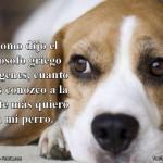 Como dijo el filósofo griego Diógenes, cuanto más conozco a la gente más quiero a mi perro.