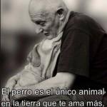 El perro es el único animal en la tierra que te ama más, que así mismo.