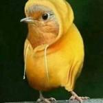 Que soy canario!! ¿Vale?