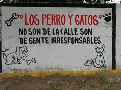 Los perros y gatos no son de la calle, son de gente irresponsables.