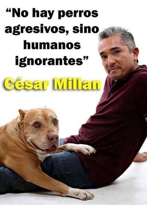 No hay perros agresivos, sino humanos ignorantes. César Millan