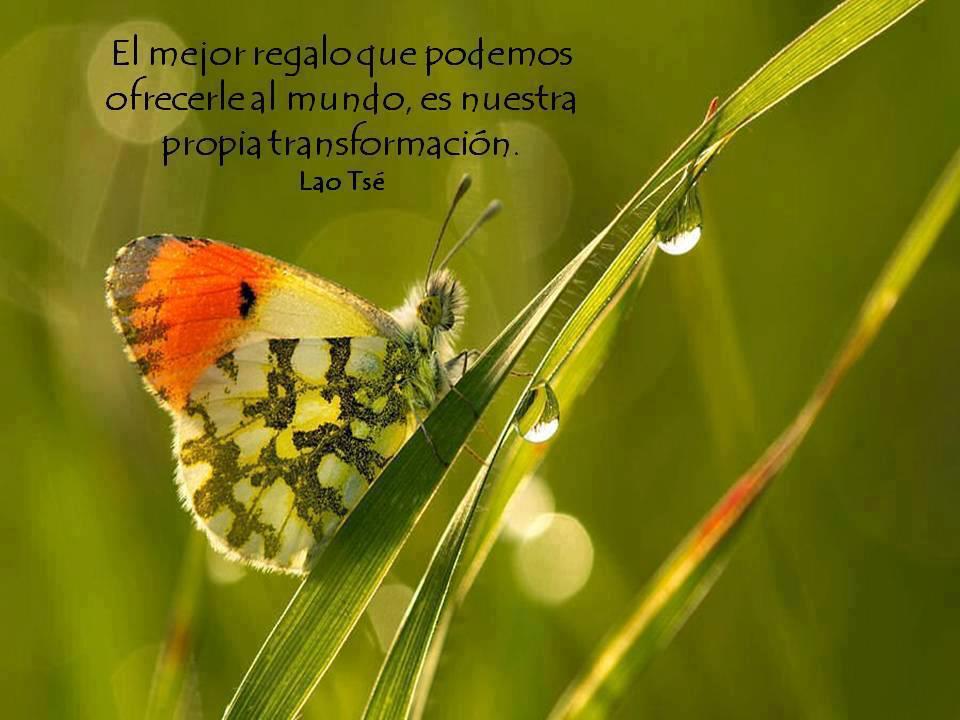 El mejor regalo que podemos ofrecerle al mundo, es nuestra propia transformación. Lao Tsé