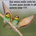 Que nunca nadie corte tus alas. Tú eres quien decide lo alto que quieres volar!!!!