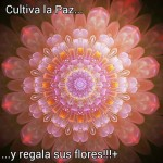 Cultiva la Paz...y regala sus flores!!!