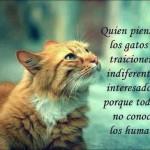 Quien piensa que los gatos son traicioneros, indiferentes, e interesados, es porque todavía no conoce a los humanos.
