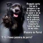 Y tú ¿Tienes palabra de perro? Prometo serte fiel en lo próspero y en lo adverso, en la salud y en la enfermedad, en la riqueza, en la pobreza, y amarte y respetarte todos los días de mi vida...¡Palabra de Perro!