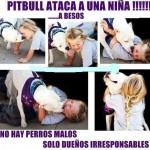 Pitbull ataca a una niña!!!!! ... A besos.
