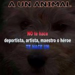 Matar a un animal. No te hace deportista, artista, maestro o héroe. Te hace un Asesino.