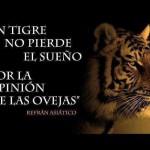 Un tigre no pierde el sueño, por la opinión de las ovejas. Refrán Asiático.