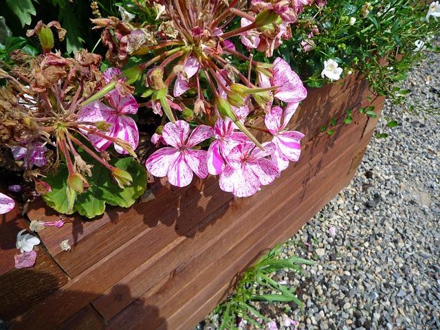 Sugerencias para terrazas balcones maceteros y canteros for Canteros de jardin